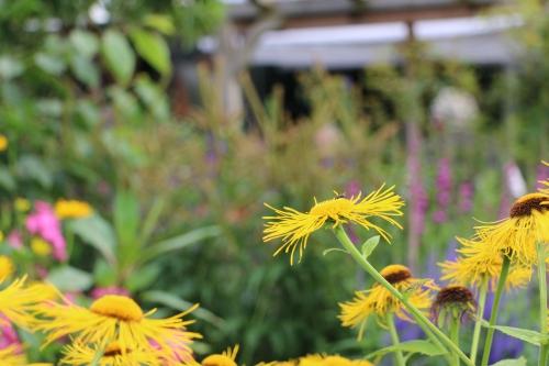 Bienenfreundlicher garten for Bienenfreundlicher garten